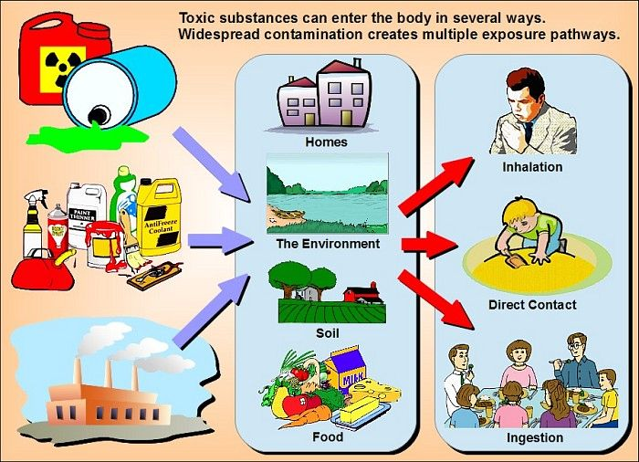 Examples of ways toxic substances can enter the human body